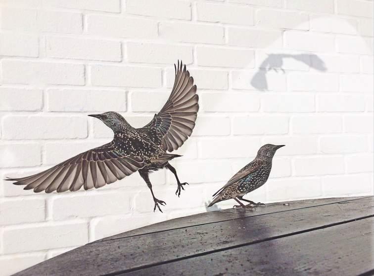 Second place, Cafe Birds.